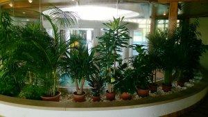 Pflegeleichte Palmenarten für das Büro, Wohnung und Wintergarten